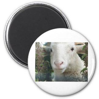 Looking Sheepish Magnet