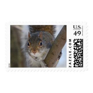 Looking Squirrel Postage