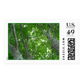 Looking through the Treetops Postage