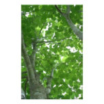 Looking through the Treetops Personalized Stationery