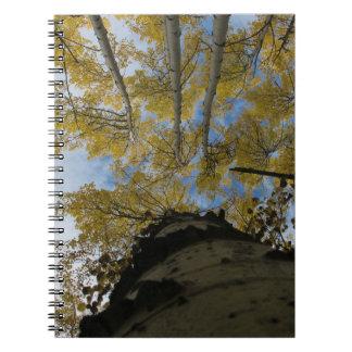Looking up an Aspen Trunk Spiral Notebook