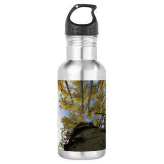 Looking up an Aspen Trunk Water Bottle