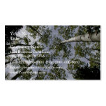 Looking Up at Aspen Trees in forest Double-Sided Standard Business Cards (Pack Of 100)