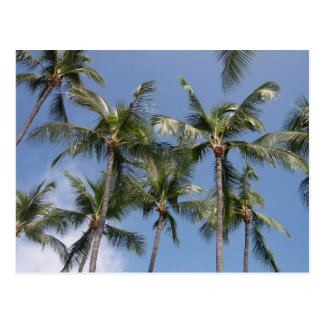 Looking up at palm trees postcard