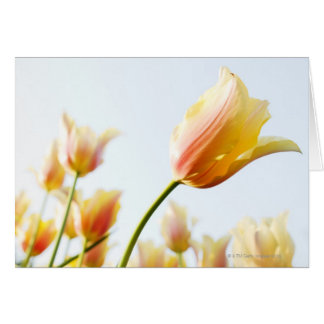 looking up at tulips growing in a garden card