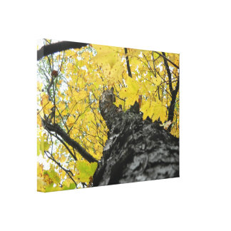 Looking Up at Yellow Fall Leaves Canvas Print