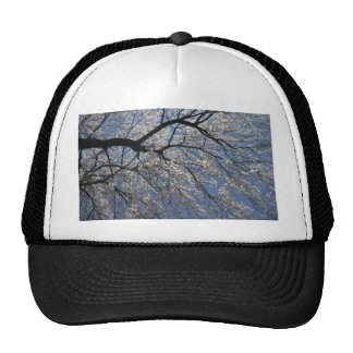 Looking Up Into Tree Trucker Hat