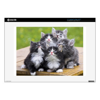 looking up kittens laptop decal