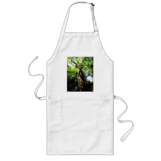 Looking up large tree in forest - Apron