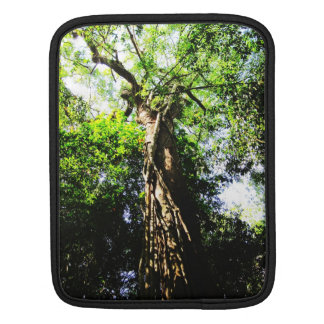 Looking up large tree in forest - iPad sleeve