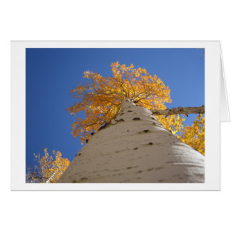 Looking Up The Aspen Tree Greeting Card