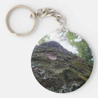 Looking Up the Kauri Basic Round Button Keychain