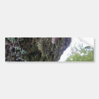 Looking Up the Kauri Bumper Sticker
