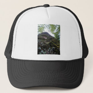 Looking Up the Kauri Trucker Hat