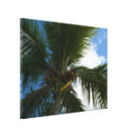 Looking Up to Coconut Palm Canvas Print