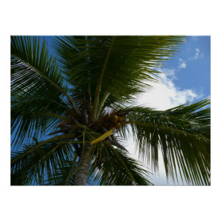 Looking Up to Coconut Palm Print