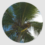 Looking Up to Coconut Palm Sticker