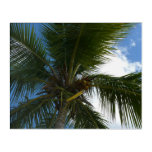 Looking Up to Coconut Palm Tree Tropical Nature Acrylic Wall Art
