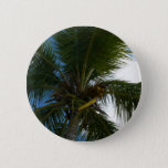 Looking Up to Coconut Palm Tree Tropical Nature Button
