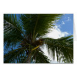 Looking Up to Coconut Palm Tree Tropical Nature Card