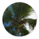 Looking Up to Coconut Palm Tree Tropical Nature Ceramic Knob