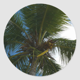 Looking Up to Coconut Palm Tree Tropical Nature Classic Round Sticker