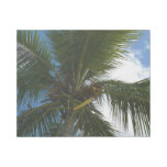 Looking Up to Coconut Palm Tree Tropical Nature Gallery Wrap