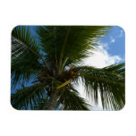 Looking Up to Coconut Palm Tree Tropical Nature Magnet