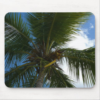 Looking Up to Coconut Palm Tree Tropical Nature Mouse Pad