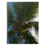Looking Up to Coconut Palm Tree Tropical Nature Notebook