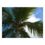 Looking Up to Coconut Palm Tree Tropical Nature Photo Print