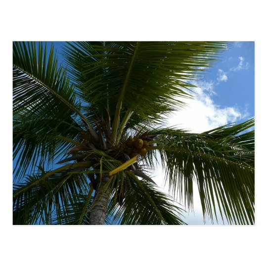 Looking Up to Coconut Palm Tree Tropical Nature Postcard