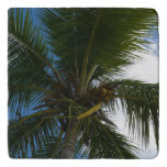 Looking Up to Coconut Palm Tree Tropical Nature Trivet