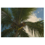 Looking Up to Coconut Palm Tree Tropical Nature Wood Poster