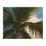 Looking Up to Coconut Palm Tropical Beach Wood Prints