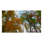 Looking Up to Fall Leaves Beautiful Autumn Photo Poster