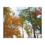 Looking Up to Fall Leaves I Colorful Fall Foliage Canvas Print