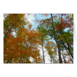 Looking Up to Fall Leaves I Colorful Fall Foliage Card