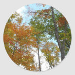 Looking Up to Fall Leaves I Colorful Fall Foliage Classic Round Sticker