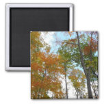 Looking Up to Fall Leaves I Colorful Fall Foliage Magnet