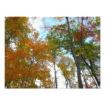 Looking Up to Fall Leaves I Colorful Fall Foliage Photo Print