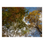 Looking Up to Fall Leaves II Autumn Landscape Poster