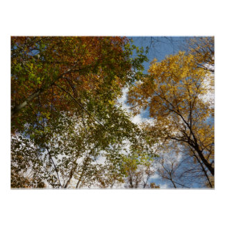 Looking Up to Fall Leaves II Autumn Nature Poster