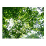 Looking Up to Summer Leaves Green Nature Postcard