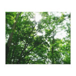 Looking Up to Summer Trees Canvas Print