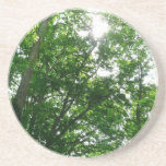 Looking Up to Summer Trees Drink Coaster