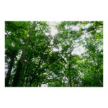 Looking Up to Summer Trees Poster