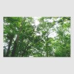 Looking Up to Summer Trees Rectangular Sticker