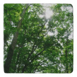 Looking Up to Summer Trees Trivet