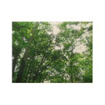 Looking Up to Summer Trees Wood Poster